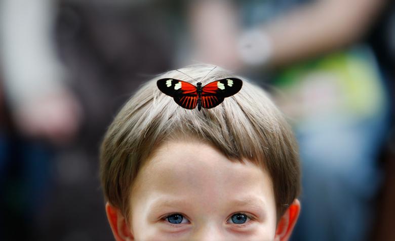 Butterflies Are Blooming At Frederik Meijer Gardens