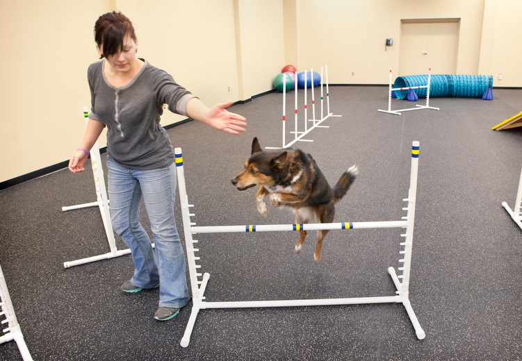 Whiskers University offers agility and pilates classes for dogs