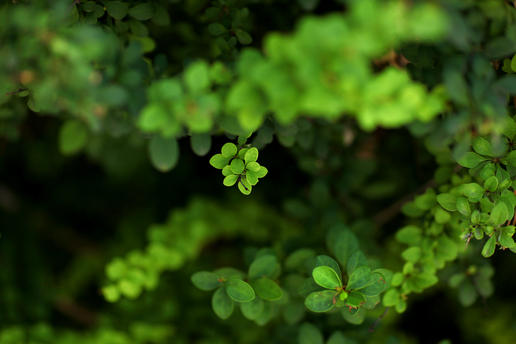 Greens01